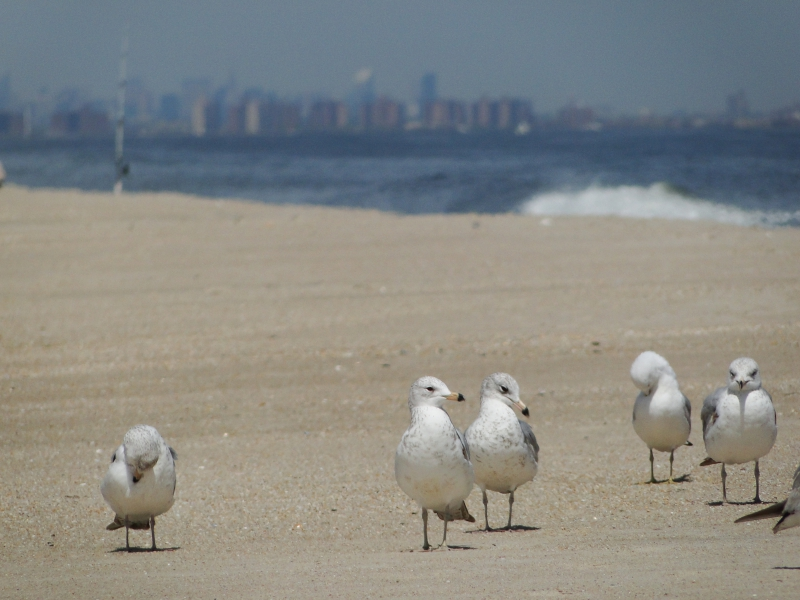NYC from Jersey Shore