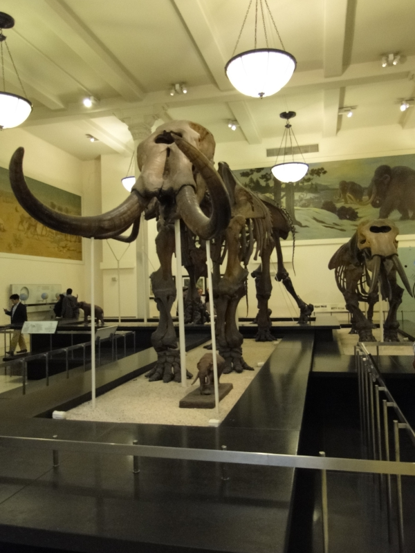 Wooly Mammoth Museum of Natural History New York City