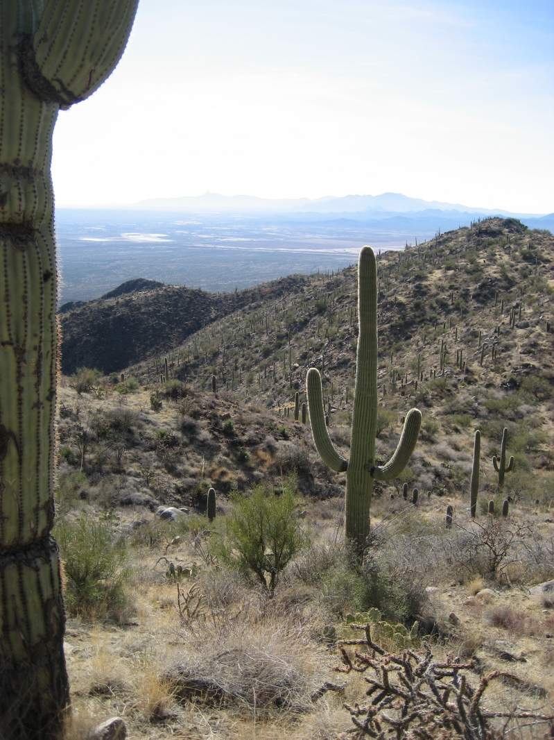 Saguaro NP during the Day